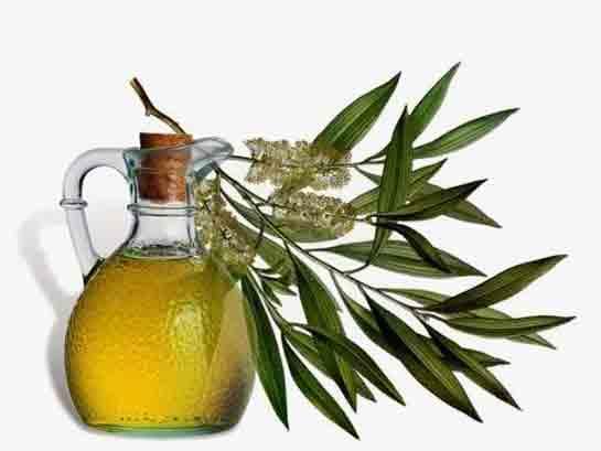 hpv tedavisi bitkisel